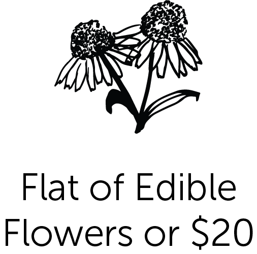 Flat of Editable Flowers