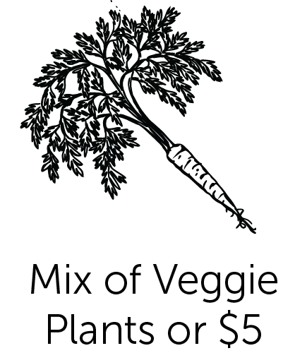 Mix of Veggie Plants or $5