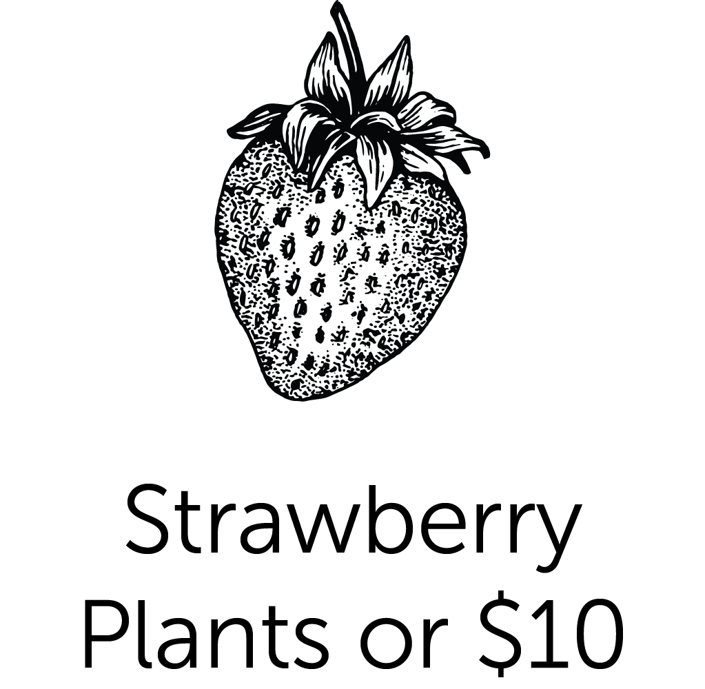 Strawberry Plants or $10